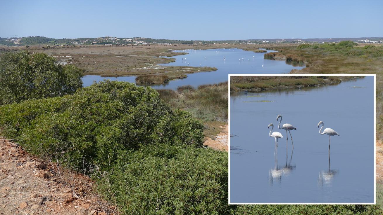 Flamingos im Ria de Alvor